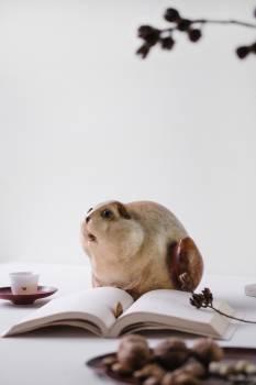 Dog Canine Pet Free Photo