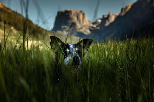 Dog Hunting dog Grass #317618