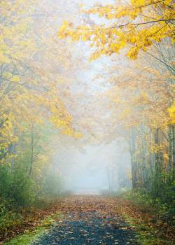 Tree Autumn Forest Free Photo