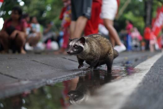 Mammal Wildlife Fur #317813