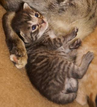 Mammal Cat Animal #31819