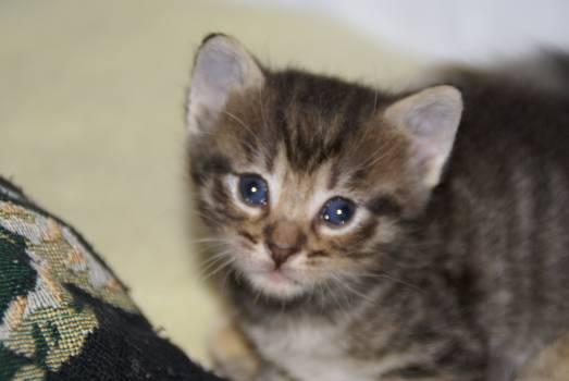 Kitten Cat Feline #31829