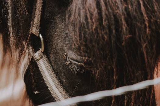 Animal Horse Stable gear Free Photo