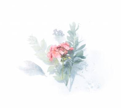 Watercolor Painting Floral Free Photo