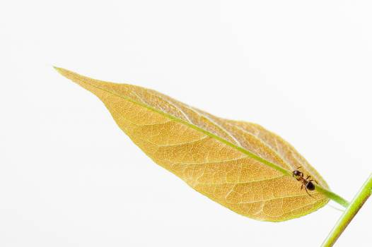 Leaf Plant Close Free Photo