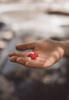 Berry Fruit Edible fruit #318983