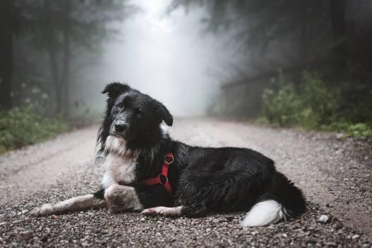 Schnauzer Terrier Dog #319212