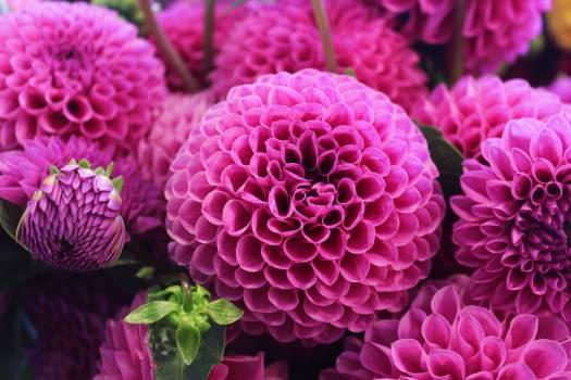 Pink Flower #31923