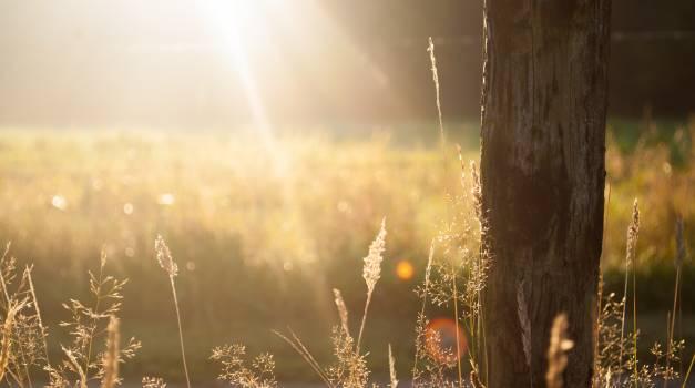 Field summer sun meadow #31936