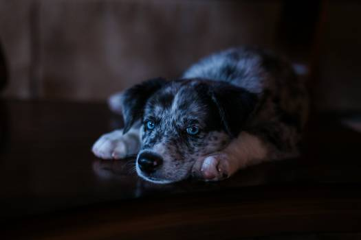 Dog Canine Pet #319404