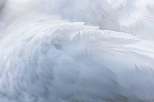 White Texture Fractal Free Photo