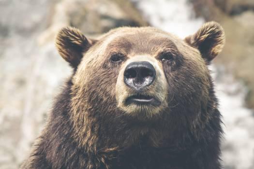 Nature animal fur dangerous #31958