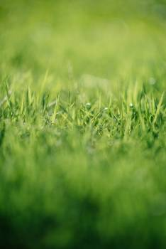 Grass Field Lawn Free Photo