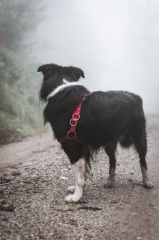 Dog Shepherd dog Border collie #319725
