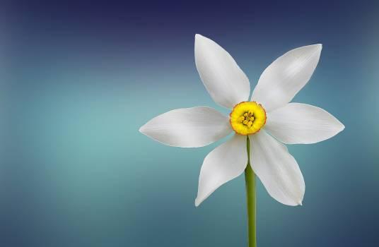 White and Yellow Flower Free Photo