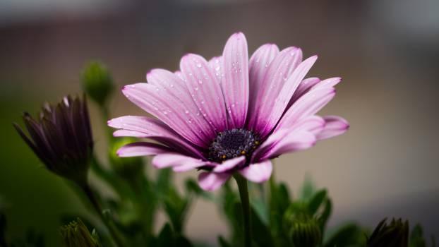 Purple Petal Flower #32016