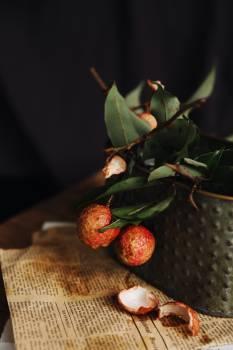 Fruit Strawberry Shrub #320233