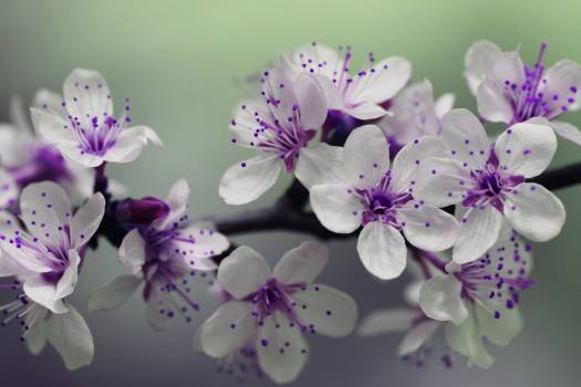 White and Purple Petal Flower Focus Photography #32027