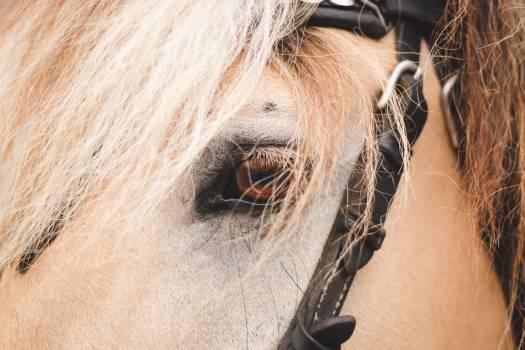Horse Head Pet Free Photo