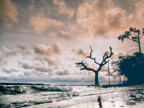 Sky Atmosphere Tree Free Photo