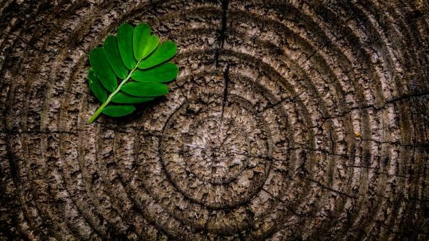 Green Leaf Plant on Brown Wooden Stump #32163