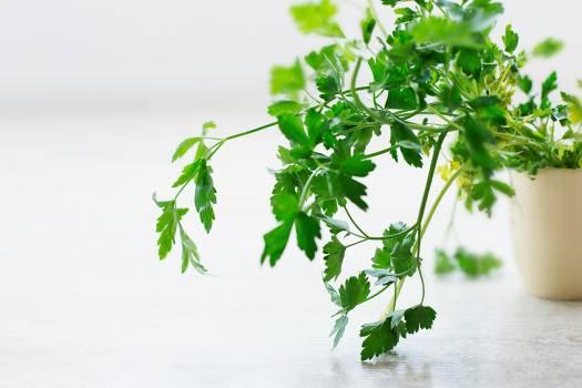 Plant Leaf Parsley Free Photo