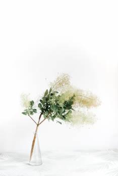Tree Plant Leaf Free Photo