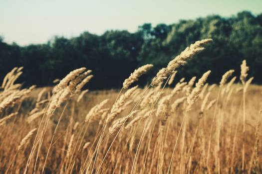 Nature field summer agriculture #32219