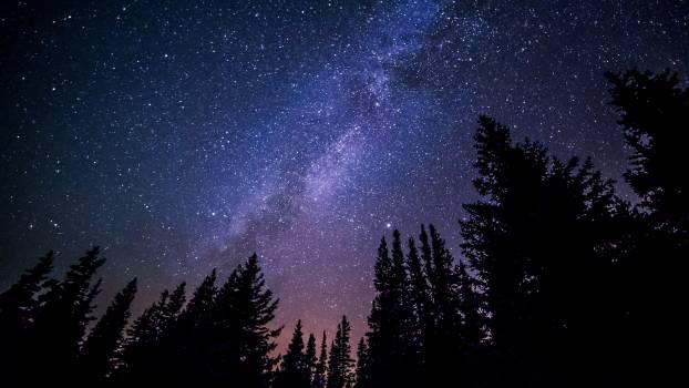 Stars night forest sky #32254