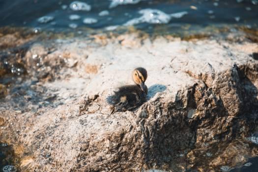 Bird Auk Seabird Free Photo