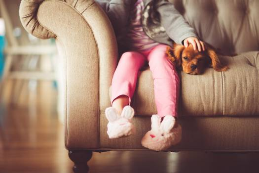 Girl in Grey Jacket and Pink Jeans Sitting in Grey Sofa Holding a Brown Short Coated Puppy #32308