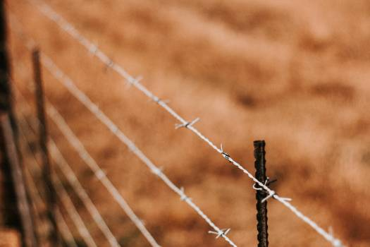 Wheat Cereal Fence Free Photo