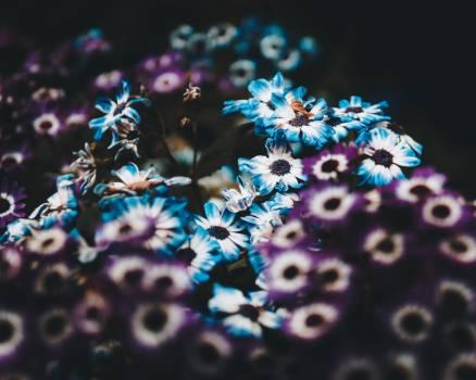 Herb Texture Pattern Free Photo