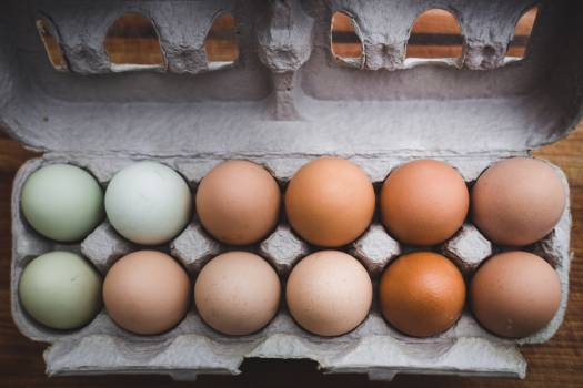 Egg Eggs Food Free Photo