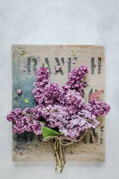 Lilac Flowers Flower Free Photo