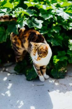 Tiger Cat Feline #325504