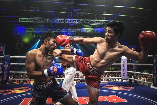 Boxer Combatant Person Free Photo