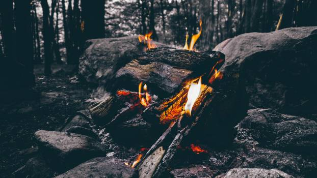 Wood Fire Camping on Forest #32630
