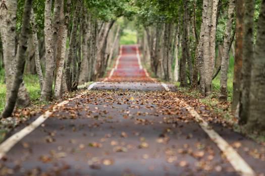 Empty Road Between Trees #326445