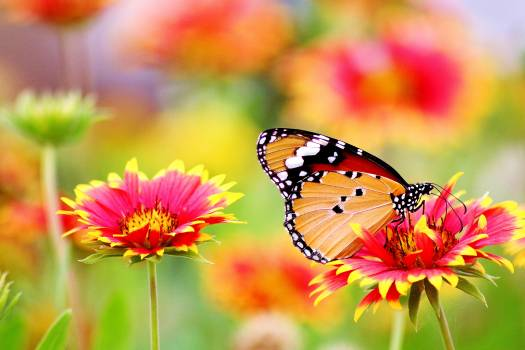 Butterfly Perched on Flower #326447