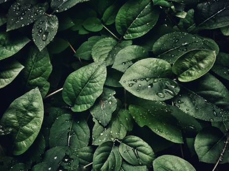 Close-Up Photography of Leaves With Droplets #326457