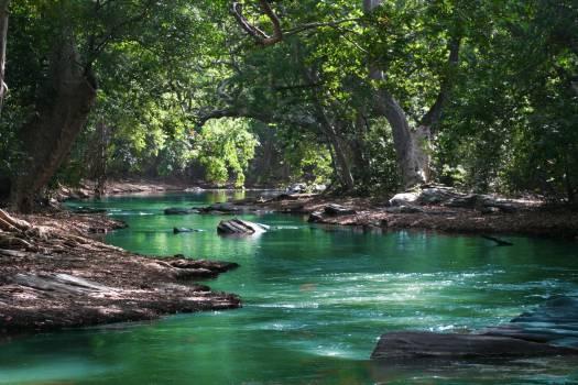 Body of Water Between Green Leaf Trees #326479