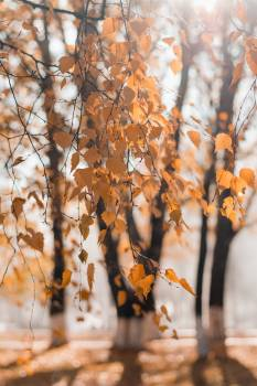 Selective Focus Photography of Dried Leaves #326523