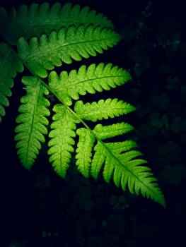 Close-up Photo Of Green Fern Leaf Free Photo