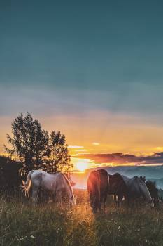 Four Assorted-color Horse on Grass Fields Near Tall Trees during Sunset Free Photo