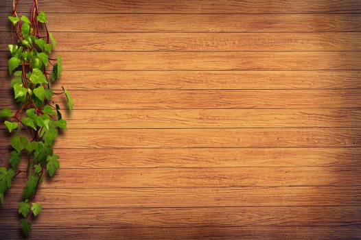 Brown Wooden Surface Beside Green Plant Illustration #326677