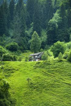 Brown Wooden House Surrounded by Green Trees #326821