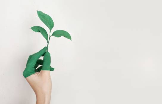 Person's Left Hand Holding Green Leaf Plant Free Photo