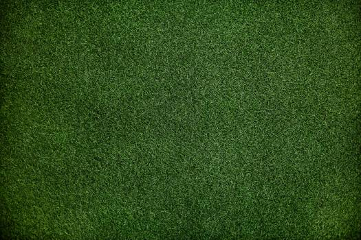 Green Lawn Grass Free Photo