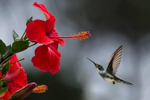 Brown Hummingbird Selective Focus Photography Free Photo